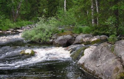 best-ways-to-purify-water-when-camping